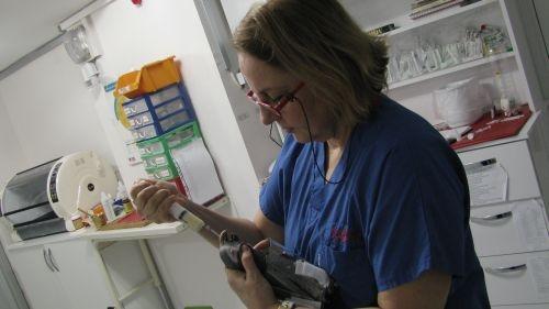 Kritik durumdaki hasta papağan kursaktan besleniyor
