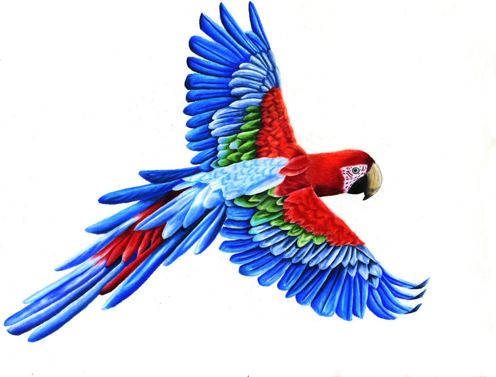 Red Macaw Parrot Flying Kuş Muayene, Tedavi v...
